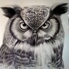 How to Draw an Owl Face Step by Step    Bird Drawing