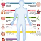 Infographic: Human Body Systems