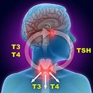Thyroid Medication Side Effects, Drug Interaction & Weight Loss