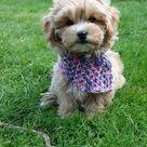PDF Knitting PATTERN - Dog Raspberry Buttoned Cowl /Neckwarmer/Chunky Scarf/ Bandana/Cat Pet Bib Clothing/Canine Diy Accessories