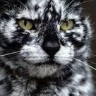 Cats with the most unusual markings.