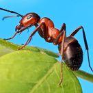 Ameisen vertreiben ohne Gift - 10 natürliche Hausmittel für die Wohnung