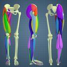 Leg Anatomy Study rev.3   12.05.2017, Aleksandrs K
