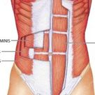 Abdominal Muscles: Origin, Insertion, Action & Nerve Supply