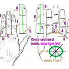 Su-jok acupuncture methods and treatment (Su-jok medicine blog)