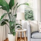 Shauna Bottos - Decorating Tips for Anyone on a Shoestring Budget