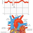 How the Heart's Electrical System Works
