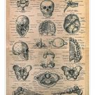 10 inch Photo. Skeleton of men