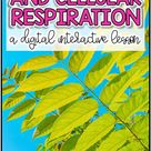 Photosynthesis and Cellular Respiration Digital Lesson