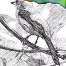 10 Best App for Pencils Sketch - Pencils Sketches