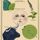 Zodiac Astrology Vintage Style Digital Poster Taurus   Etsy