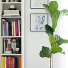 Narrow Bookshelf