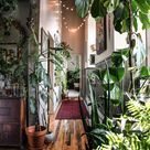 Wonder Plants 2: Your Urban Jungle Interior + Win a copy!