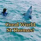 Coral World Ocean Park - Marine Wildlife Park in USVI St Thomas