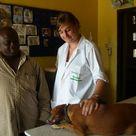 Veterinary Medicine Internship in Ghana   Projects Abroad