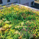 Dachbegrünung: Anlage, Pflege und Kosten