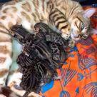 What a wonderful kitty world 🥰
