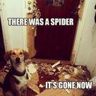 Killing Spiders