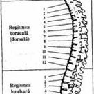 Spate – A treia vertebra dorsala T3 – Cauzele subtile ale imbolnavirii