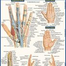 QuickStudy   The Foot Laminated Study Guide