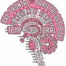 El cerebro en palabras
