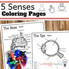 Special Senses Diagrams.  Nervous System Coloring Pages.