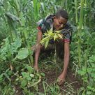 Aufforstung von Menschen für Menschen: Bäume pflanzen, Flut verhindern