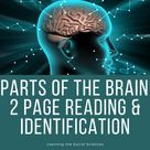 Parts of the Brain Reading and Identification Activity - Distance Learning