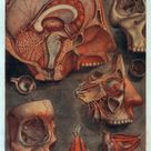 Disturbingly beautiful almost dirty images of human anatomy from the 1700s NSFW