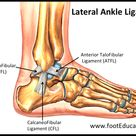 Ligaments of the Foot and Ankle Overview - FootEducation