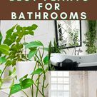 Best Plants That Thrive In Your Bathroom   Simplify Plants   Indoor Plant Care Guides   House plants