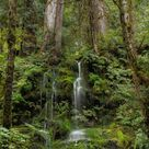 A small waterfall spills down a hillside in the Quinault Rain Forest in Olympic National Park. The area receives 12 to 14 feet (about 4 meters) of rain a year.