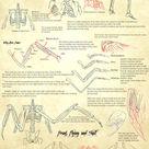 Winged Human Anatomy by Zethya on DeviantArt