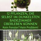 Ideal fürs Bad: 12 Pflanzen, die kaum Sonnenlicht brauchen