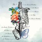 Anatomy Gift Floral Anatomy Prints Osteopathic Nurse Graduation Gift for Radiologist