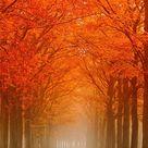 Laan met de herfst kleuren van Frans Deeders op canvas, behang en meer