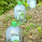 Hebt eure Plastikflaschen auf - ihr werdet sie noch für den Garten brauchen