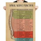 Acupuncture Ear Hand Foot Microsystem Poster 24