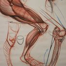 Character Design Collection Legs Anatomy
