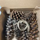 All Natural Forest - Foraged Pine Cone Chew Toys with Jute Twine for Rabbits, Chinchillas, Guinea Pigs, Bunnies, Gerbils, Hamsters Pet Treat