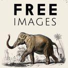 Dictionnaire Universel D'histoire Naturelle | Dictionnaire Universel D'histoire Naturelle Free CC0 Public Domain Images | rawpixel