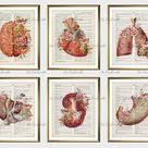 6 Floral Anatomical Organs Art Posters Medical Anatomy Art Dictionary Page Drawing Human Heart Brain