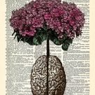 Brain Human Anatomy Flowers Dictionary Art Print Anatomical | Etsy