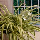 Glass Plant Water Feeder - D