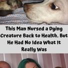 This Man Nursed a Dying Creature Back to Health. But He Had No Idea What It Really Was