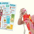 Interactive Human Body - STEM