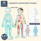 Set of 17 Pieces Magnetic Human Body Puzzle Double Sided, approx. 3 Foot Tall pack