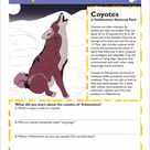 Coyote Facts | Worksheet | Education.com