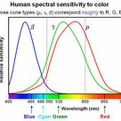 Spectral Sensitivity   Curve Distribution of 3 separate cone cells low, med, high