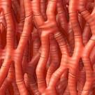Cardiac muscle, artwork   Stock Image   C002/2972